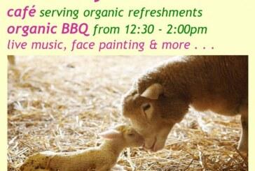 Lambing Celebration at Tablehurst Farm