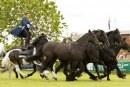 Edenbridge & Oxted Agricultural Show